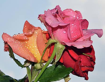Three Roses by Elvira Ladocki
