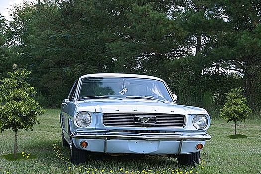 66 Mustang Art by Danny Jones