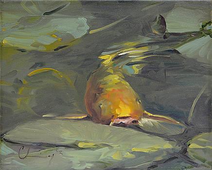 688 Golden Koi by Chuck Larivey