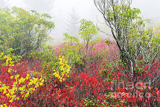 Autumn Fog Dolly Sods by Thomas R Fletcher