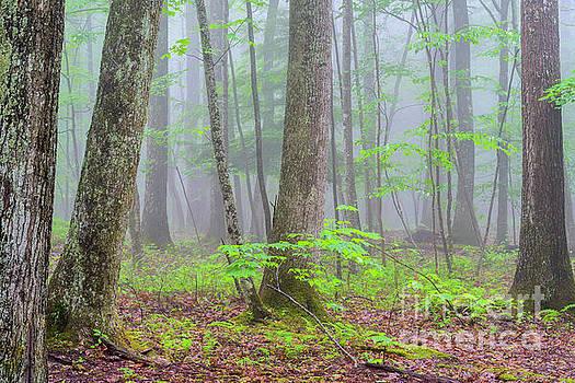 Spring Monongahela National Forest by Thomas R Fletcher