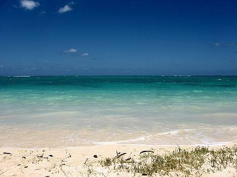 A Beautiful Beach by Halle Treanor