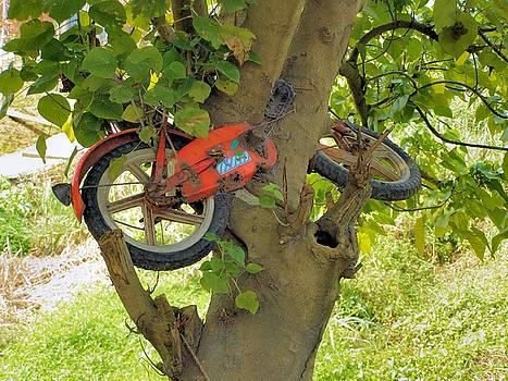 A bike growing in a tree by Kathy Daxon