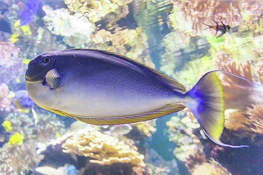 A Blue Fish by Terry Thomas