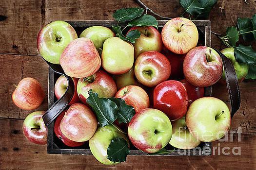 A Bushel of Apples  by Stephanie Frey