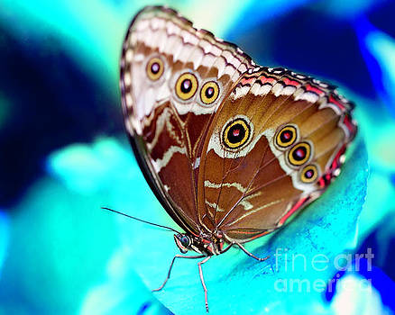 A butterfly in a blue world by Eyzen M Kim