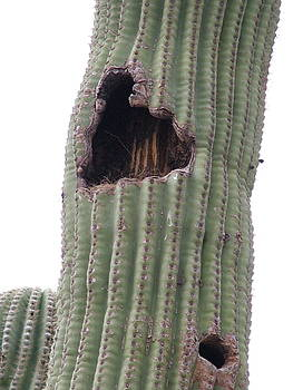 A Cactus Nest by Vickie Roche