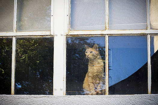 Mary Lee Dereske - A Cat