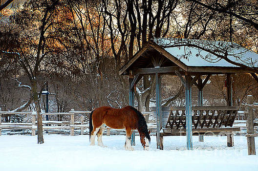 A Cold Winter Morning by Elaine Manley