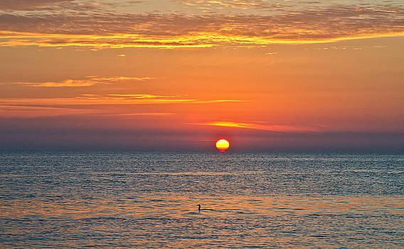 A Cormorant's Sunrise by Sandy Schepis