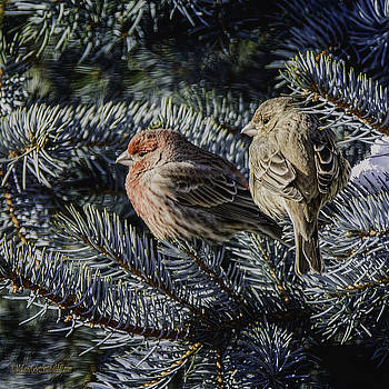 LeeAnn McLaneGoetz McLaneGoetzStudioLLCcom - A Couple of House Finch