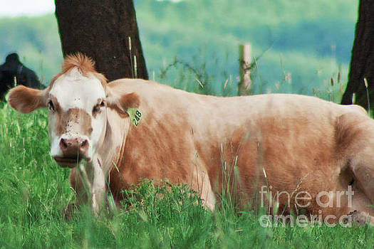 A Cow's Tale - Lazy Day by Janie Johnson
