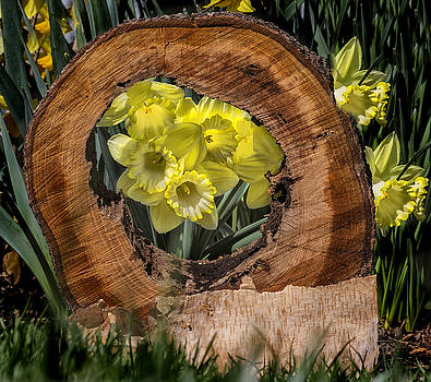 A Daffodill Hole by Dan P Brodt Photography