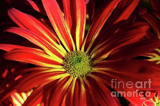 A Dose of Color by Cindy Manero