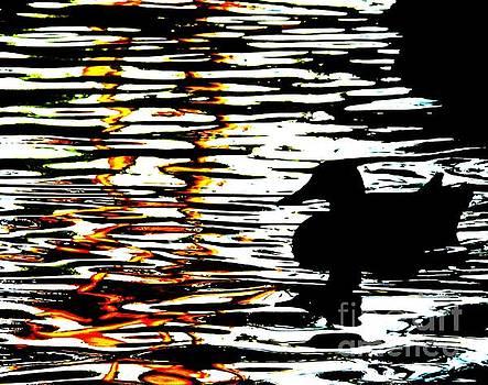 A Duck by John King