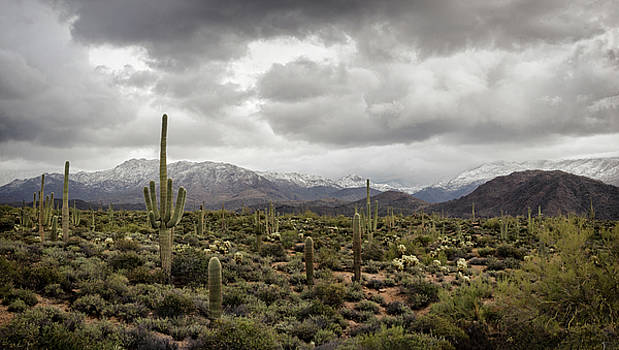 A Dusting of Desert Snow on the Mountain  by Saija Lehtonen