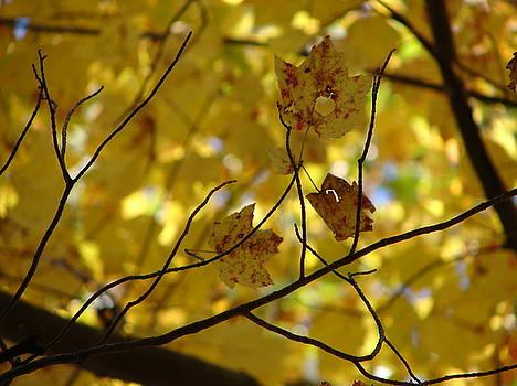 A Fall Day in Mass 2 by Belinda Dodd