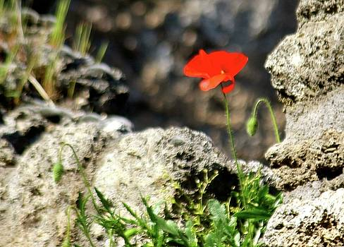 A Flower in the Ruins of Pompei by Janice Aponte