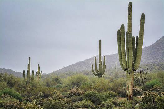 Saija Lehtonen - A Foggy Sonoran Day