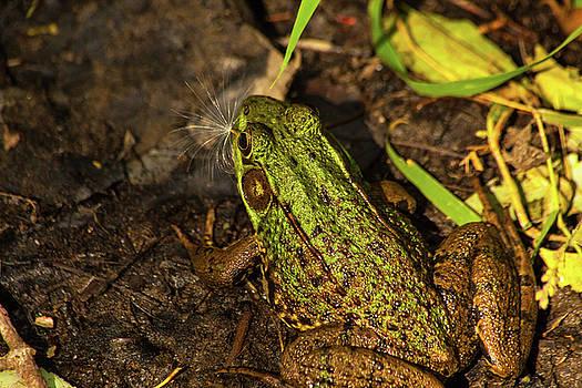 Karol Livote - A Frogs Wish