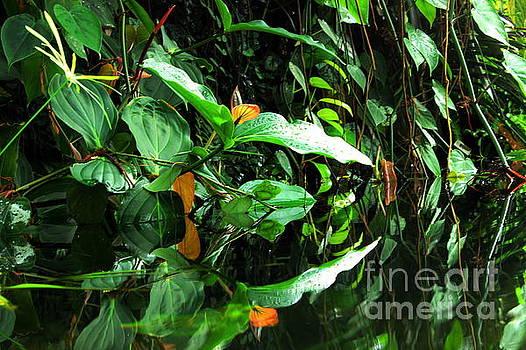A Garden Mirror by Natalie Ortiz