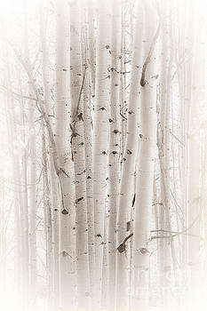 A Gathering by The Forests Edge Photography - Diane Sandoval