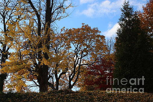 A Glorious Day in Autumn  by Dora Sofia Caputo Photographic Art and Design