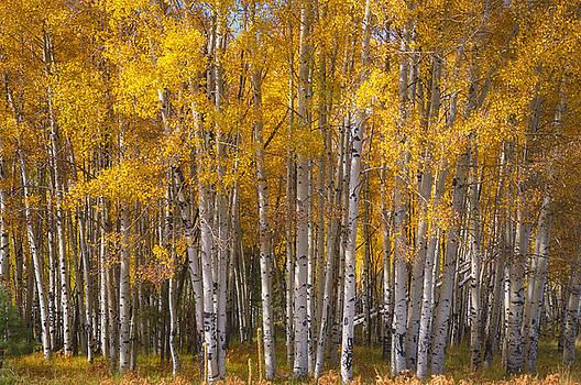 Saija  Lehtonen - A Golden Aspen Grove