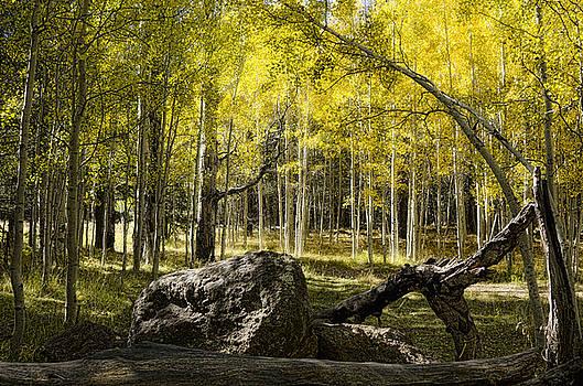 Saija  Lehtonen - A Golden Autumn