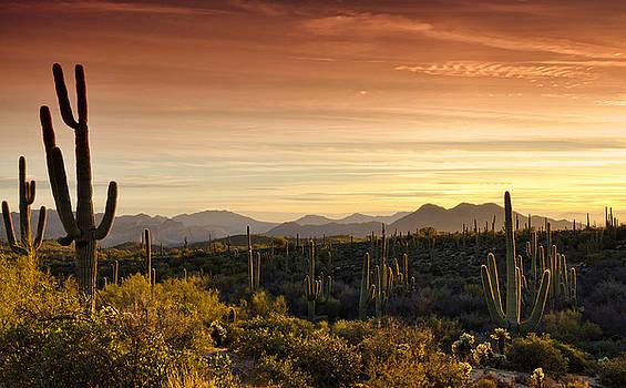 Saija  Lehtonen - A Golden Desert Sunset