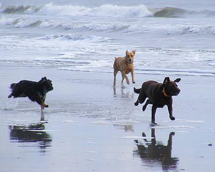 A Happy Beach Joy Ride  by Elena Tudor