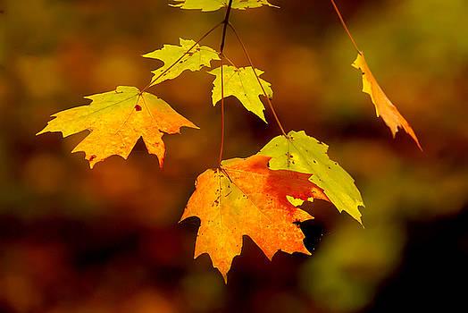 A Hint of Fall by Keith Bridgman