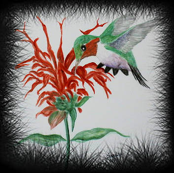 A Hummingbird by Sandra Maddox