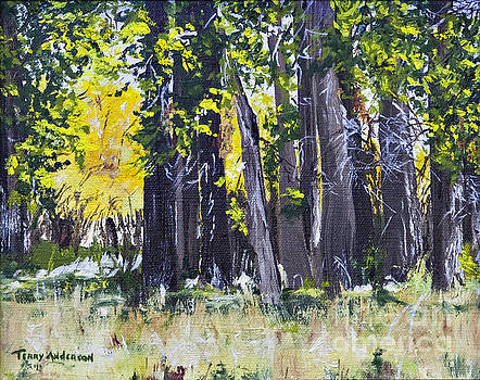 A Light in the Forest by Terry Anderson