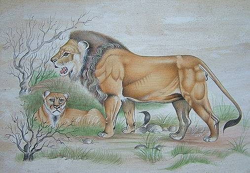 A Lion by Unknown