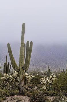 Saija Lehtonen - A Little Desert Fog