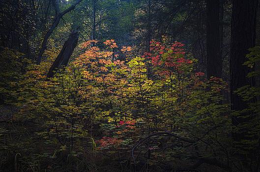 Saija  Lehtonen - A Little Hint of Fall Color