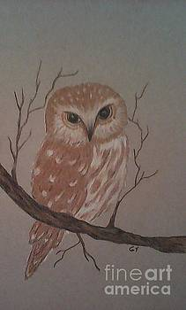 A Little Owl by Ginny Youngblood