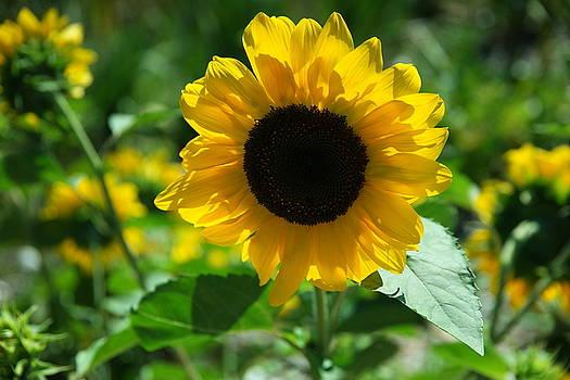 A lovely flower by Jeff Swan