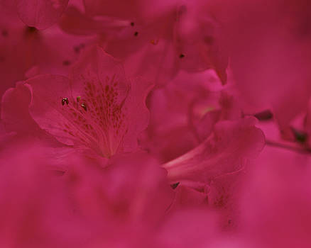A Magenta Moment by Jane Eleanor Nicholas