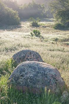 A meadow full of morning light by Alexander Kunz