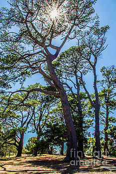 A Mighty Tree by Naomi Burgess