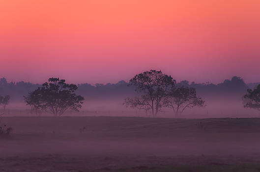 A Misty Fall Morning by Bob Marquis