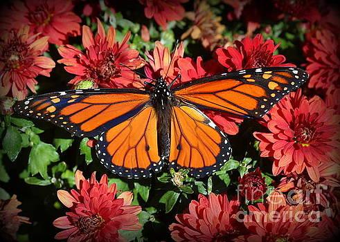 A Monarch In The Garden by Dora Sofia Caputo Photographic Art and Design