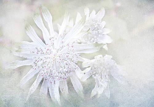 A Paler Shade by Margaret Hormann Bfa