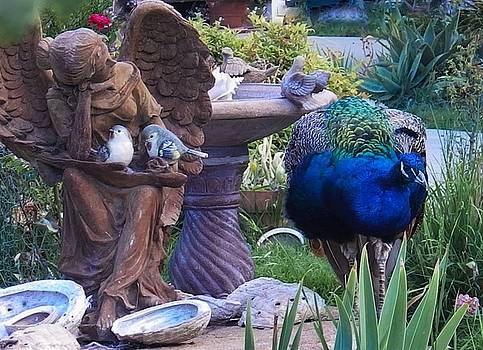 A Peacock by the Fountain by Jan Moore