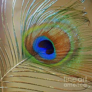 Mary Deal - A Peacock Eye