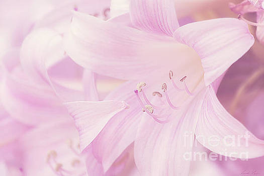 A Profusion of Pink by Linda Lees