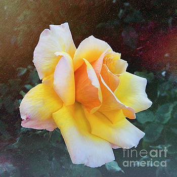 A Rose for My Lady by Mariola Bitner