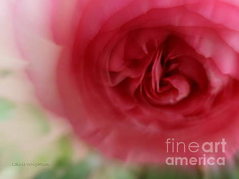 A Rose Is A Rose by Lainie Wrightson